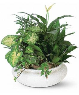 GREEN PLANTS DISHGARDEN FOR HOME OR SERVICE